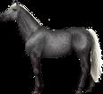 Holsteiner - Fell 71