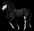 Paint horse - Fell 1000000160