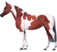 Paint horse - Fell 35
