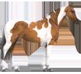 Paint horse - Fell 5