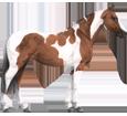 Paint horse - Fell 80