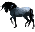 Amerikanischer Traber - Fell 1000000161