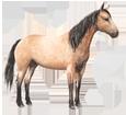 Quarter Horse - Fell 77