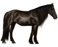 Mustang - Fell 26