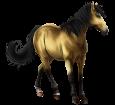 Marquesas Pferd - Fell 20