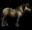 Gudbrandsdal-Pferd - Fell 23