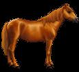 Kaspisches Kleinpferd  - Fell 77