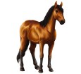 Donau Delta Pferd - Fell 79