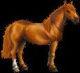 Chilenisches Pferd - Fell 77