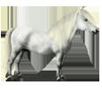 Shetland Pony - Fell 52
