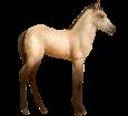 Connemara Pony - Fell 20