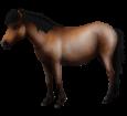 Hokkaido-Pony - Fell 39