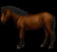 Thailändisches Pony - Fell 76