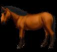 Thailändisches Pony - Fell 79