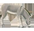 Esel - Fell 52