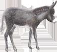 Esel - Fell 71
