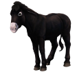 Schwarzer Esel - Fell 1000000156