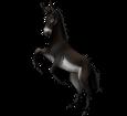 Schwarzer Esel - Fell 1000000165