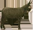Esel aus Poitou - Fell 69